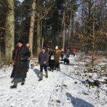 Randonneurs et chiens en forêt
