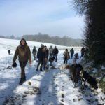 Balade canine dans la neige avec BBS, Berger portugais et Chien-loup Slovaque