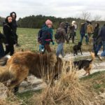 Balade canine encadrée par Julie Willems, comportementaliste animalier