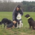 Balade pour chiens organisée par Julie Willems, comportementaliste animalier