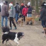 Balade pour chiens organisée par Julie Willems, comportementaliste canin