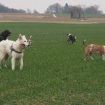Balade canine organisée par Julie Willems, comportementaliste chiens