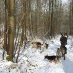 Beagle, Bulldog anglais et Mâtin espagnol marchant sur un sentier enneigé