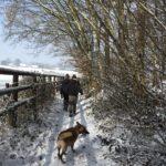 Berger belge malinois marchant dans la neige