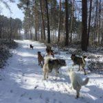Moment d'amusement canin pour Berger suisse, Malamute, Berger allemand, Malinois et Beagle
