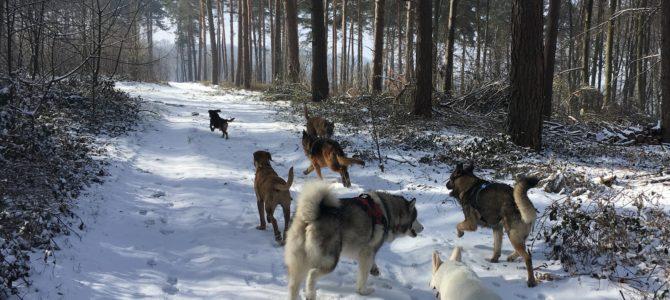 Balade canine du 03.03.18: sur la neige !