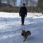 Boulegdogue français courant dans la neige