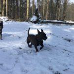 Sprint canin dans la neige