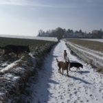 Berger allemand, Malinois, Beagle et d'autres chiens en vadrouille
