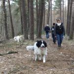 Border collie galopant sous les sapins