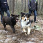 Balade pour chiens encadrée par Julie Willems, comportementaliste chiens