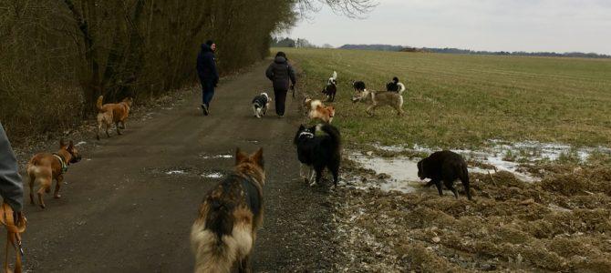 Les photos de notre deuxième balade canine du 18.03.18