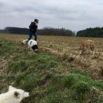 Balade pour chiens encadrée par Julie Willems, comportementaliste pour chiens