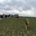 Balade canine encadrée par Julie Willems, comportementaliste animalieBalade canine encadrée par Julie Willems, comportementaliste animalierBalade canine encadrée par Julie Willems, comportementaliste animalier