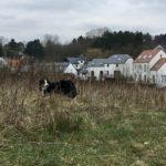 Balade pour chiens encadrée par Julie Willems, comportementaliste canin