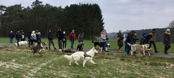 Les photos de notre première balade canine du 18.03.18