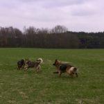 Balade pour chiens encadrée par Julie Willems, comportementaliste chien