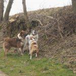 Balade pour chiens organisée par Julie Willems, comportementaliste pour chien