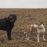 Balade pour chiens organisée par Julie Willems, comportementaliste pour chiens