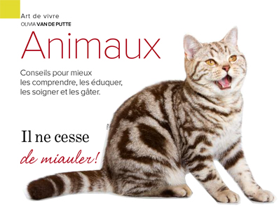 miaulement chat