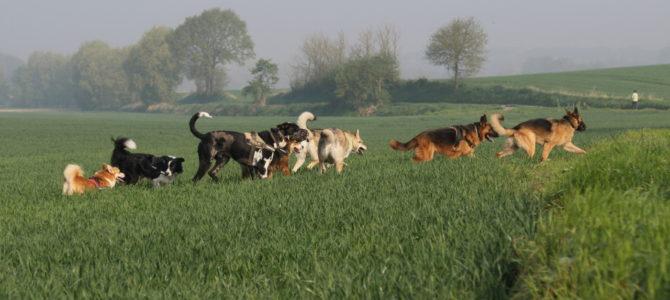 Photos des balades canines du 21.04.18 par un professionnel!