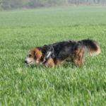 Joli chien croisé dans les cultures