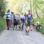 Un Welsh Corgi avec d'autres chiens