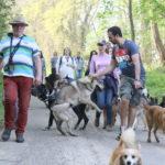 Plusieurs chiens en balade