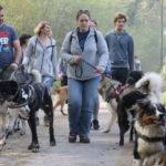 Promenade avec les chiens en laisse