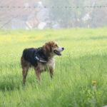 Joli chien dans une grande prairie