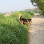 Joli chien qui revient sur le chemin