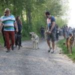 Chien loup tchèque et Berger allemand en route avec leur maître