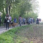 Promenade avec les chien au printemps