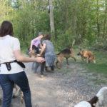 Jeux canins maitrisés