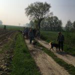 Chemin propice à la balade canine