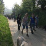 Randonnée avec les chiens sur les routes campagnardes