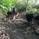 Bergers traversant le sentier forestier