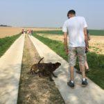 Maîtres et chiens en balade sous le soleil