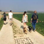 Marche canine sous le soleil printanier