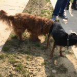 Deux chiens qui font connaissance