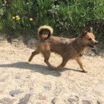 Joli petit chien qui se promène sur un chemin