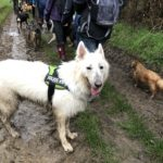 Balade canine organisée par Julie Willems, comportementaliste animalier