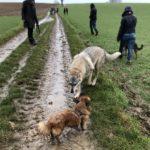 Balade canine organisée par Julie Willems, comportementaliste canin