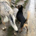Balade canine organisée par Julie Willems, comportementaliste chien