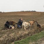Balade canine organisée par Julie Willems, comportementaliste caninBalade canine organisée par Julie Willems, comportementaliste canin