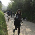 Border-collie et croisé Corgi en promenade