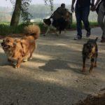Mignons petits chiens croisés et Border-collie