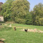 Amusement canin dans les jardins