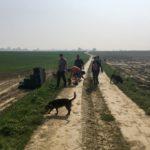 Beagle ; Labrador ; Malinois et d'autres chiens