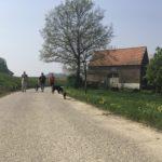 Promenade avec les chiens sur la route